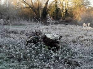 frost-on-a-stump-sandra-crook