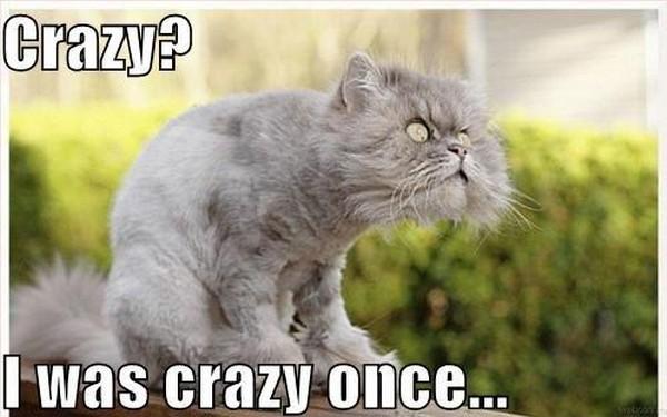 those-crazy-cats-again16